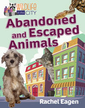 Abandoned and Escaped Animals