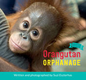 Orangutan Orphanage