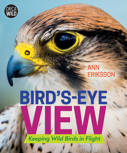 Book Cover Bird's Eye View
