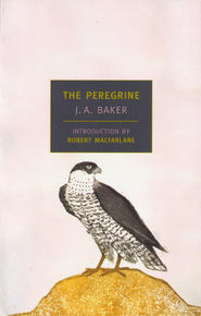 Book Cover The Peregrine